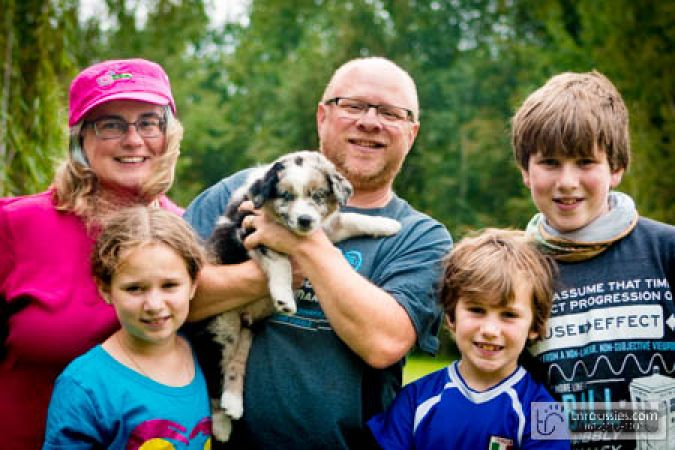 Fuji - Blue Merle Boy - Is with Rothstein Family in MN