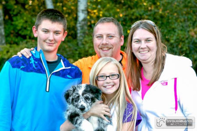 Cooper - Blue Merle Boy - Is with Peterson family in MN