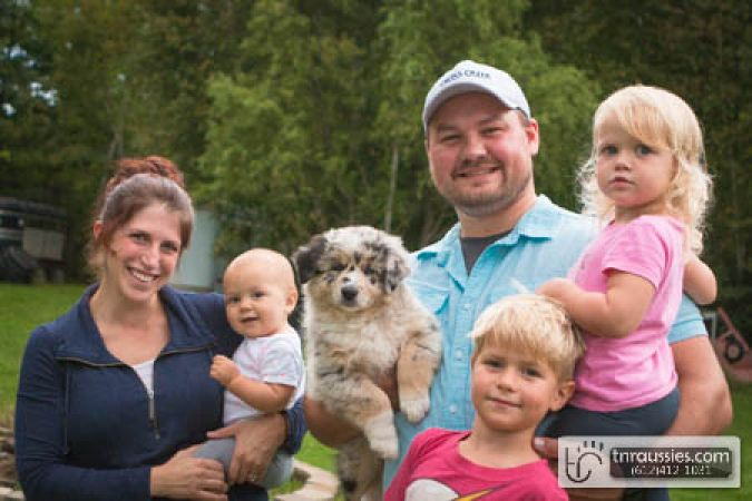 Griffin - Blue Merle Boy - Is with Allie and family in MN