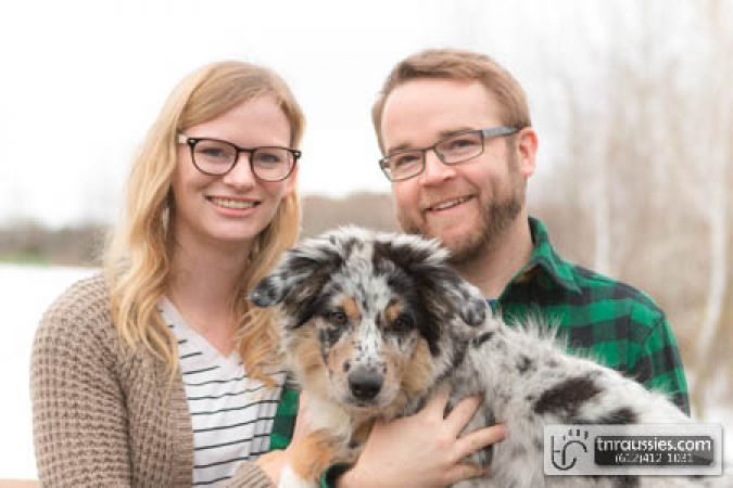 Rogue (now Mikko) - Blue Merle Boy - is with Jared in NE