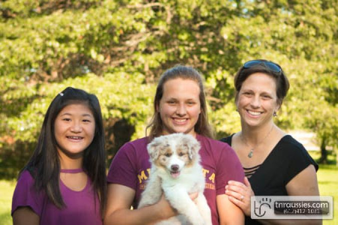 Winnie - Red Merle Girl - Is with Jennifer and Family in MN